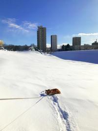 寒中散歩 - タイ式マッサージ サイチャイ