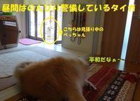 タイガのお仕事タイム! - もももの部屋(家族を待っている保護犬たちと我家の愛犬のブログです)
