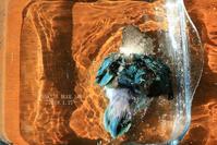 水浴びB.Bの記録 → (シンプル?・1月27日) - FUNKY'S BLUE SKY