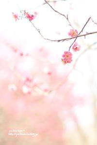 梅便り - jumhina biyori*