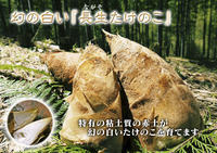 幻の白い「長生たけのこ」 毎年大量の親竹を伐採し「たけのこ畑」を作る匠と白さの秘密の土の話(後編) - FLCパートナーズストア