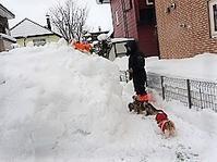 週末恒例「雪山遊び」 - わんわん・パラダイス