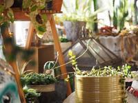 室内の植物 - 静かに過ごす部屋