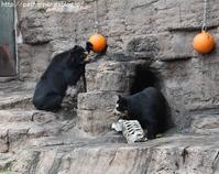 2018年1月 天王寺動物園 その3 Shilkaオヤツタイム - ハープの徒然草