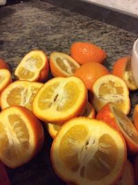 冬のセルビアオレンジ、マーマレード作り - イギリス ウェールズの自然なくらし