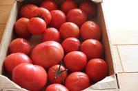 春トマトとヒヤシンス。 - 普  段  着
