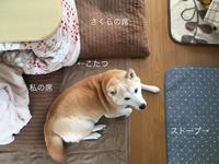 ー15℃以下は肉球警報 - 柴犬さくら、北国に生きる