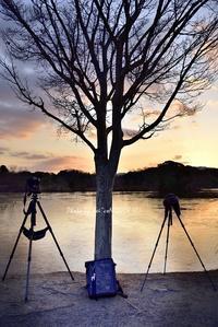 夜明けの指定席@ 水上池 - 東大寺が大好き