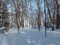 雪の森へ - 北緯44度の雑記帳