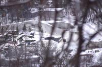 ほっきょくぐまのいちにち 2018/02/04 - メタのマクロ視点な奇跡なんてシロクマの為 -2nd season-