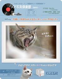 野良猫の鈴 - 39medaka