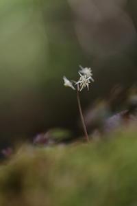 森の小さな妖精 - ecocoro日和
