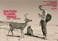 Wolfgang Tillmans: FRAGILE / Deer Hirsch ポスター - Satellite