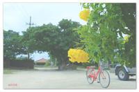 OKINAWA ISLAND TRIP 。竹富島でシーサーコレクション。 - Yuruyuru Photograph