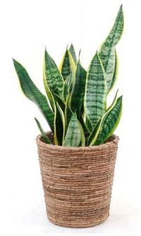 植物の力でリフレッシュ - 徳山カトレア