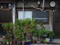 植木鉢の群れ - 音舞来歩(IN MY LIFE)