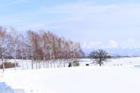セブンスターの木と…~1月の美瑛 - My favorite ~Diary 3~