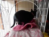 黒い侵入者 - 愛犬家の猫日記