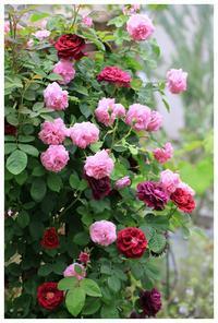 春を待ちわびて・・ - natu     * 素敵なナチュラルガーデンから~*     福岡で庭造り、外構工事(エクステリア)をしてます
