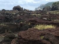 野鳥愛好家たちが熱視線を送る、粟国島へ! - 治華な那覇暮らし