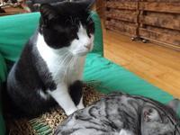 MUST BE UKTV  ザ・スミスほか - シェークスピアの猫