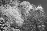 モノクロ風景 奥日光紅葉 3 - 光 塗人 の デジタル フォト グラフィック アート (DIGITAL PHOTOGRAPHIC ARTWORKS)