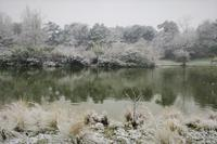 雪だるま、そして… - tony☆