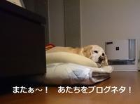 嫌がらせする犬・・・!? - まったりゆっくり過ごす日々