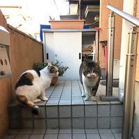 2018年初見参! - ぶつぶつ独り言2(うちの猫ら2018)