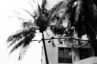 Tropical flower - floating mind