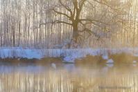 朝の光の中で - デジタルで見ていた風景