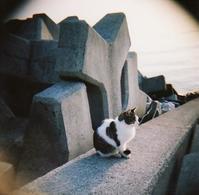 過去の写真【HOLGA編-2】 - 休日カメラ。