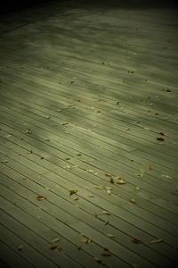 fallen leaves - 心のカメラ / more tomorrow than today ...