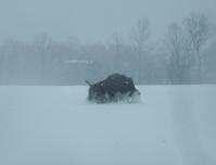 雪の中の動物たち - 標高480mの窓からⅡ