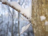 ホソミオツネントンボ妙な越冬場所 - オヤヂのご近所仲間日記