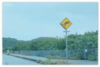 OKINAWA ISLAND TRIP 。やまねことマングローブの島。 - Yuruyuru Photograph