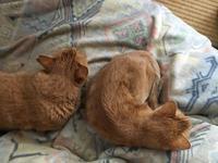 よく寝る二匹 - もるとゆらじお