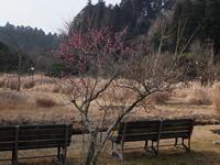 野生動物の十字路 - 千葉県いすみ環境と文化のさとセンター