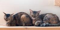 コンパクトな寝相 - 猫と夕焼け