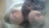 椎茸 #3-1 - 緑と手仕事 ワンダーライフ