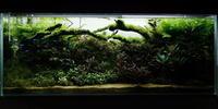 ブセ水槽とピンナ水槽の現状を - 癒しのアクアライフ
