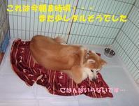とってもお利口な杏奈ちゃん、順調に回復中です♪ - もももの部屋(家族を待っている保護犬たちと我家の愛犬のブログです)