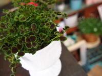 四つ葉のクローバーで幸せを - ルーシュの花仕事