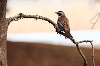 2月の野鳥 - 何でも写真館