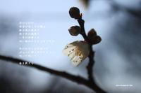 タイムカプセル - Poetry Garden 詩庭