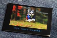 今年も「写真集」と、パピコなChipo* - FUNKY'S BLUE SKY
