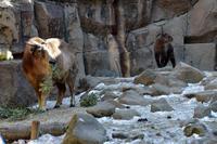 薺(ナズナ) - 動物園へ行こう
