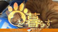 とら猫は電気仕掛けの夢を見るのか?の日 - 猫と暮らす とら猫JOYのもふもふ日記 - The SKY - Timelapse. :: 猫と暮らす(ΦωΦ)