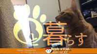 不思議な光をあびてしまった!?の日 - 猫と暮らす とら猫JOYのもふもふ日記 - The SKY - Timelapse. :: 猫と暮らす(ΦωΦ)