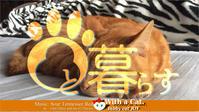 三毛猫にできるならボクにだってできるの日 - 猫と暮らす とら猫JOYのもふもふ日記 - The SKY - Timelapse. :: 猫と暮らす(ΦωΦ)
